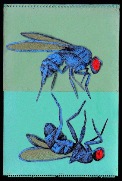 Fruit Fly Fight, 2017